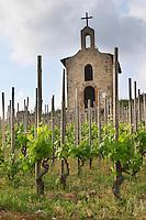 syrah The la chapelle chapel gobelet training vineyard hermitage rhone france