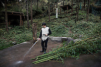 A researcher dressed in a panda costume washes and prepares bamboo for a captive born panda in its enclosure at the Hetaoping Panda Conservation Centre. The researchers wear the panda costumes to prevent the captive born pandas from becoming accustomed to humans.