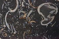 A macro view of a part of a stone with fossil shell inculsions - probably Mesozoic Actinella (Rome, 2020).<br /> <br /> Una vista con il macro di una parte di una pietra con inclusioni di conchiglie fossili - probabilmente Actinella, del Mesozoico (Roma, 2020).
