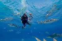 Diver photographing Lemon shark. Negaprion brevirostris.