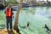 Florida Manatee, Trichechus manatus latirostris, A manatee watch volunteer monitors snorkeler's and kayaker's behavior making sure they follow laws and guidlines governing proper manatee interaction at the Three Sisters Springs sanctuary.Crystal River, Florida. No MR