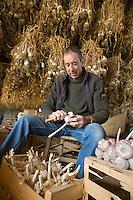 Europe/France/Midi-Pyrénées/81/Tarn/Lautrec: Mr Tournier Producteur d' ail rose de Lautrec prépare ses tresses d'ail [Non destiné à un usage publicitaire - Not intended for an advertising use]