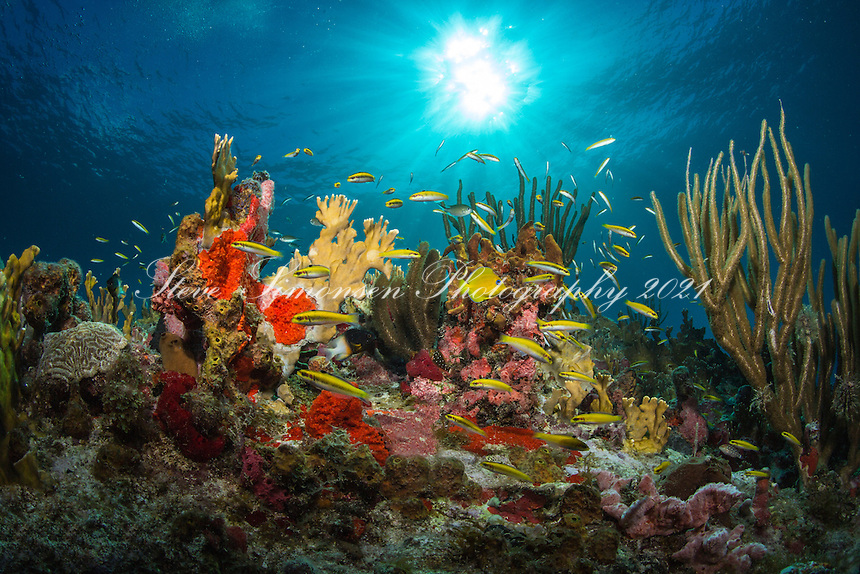 Reef Scenic<br /> St. John