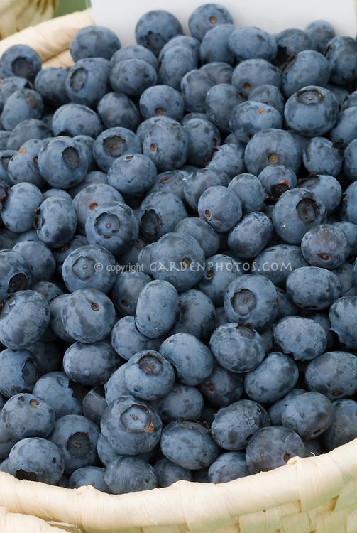 Basket of blueberries 'Duke' variety