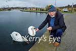 Tom Lyons feeding the swans in the Tralee Bay Wetlands on Monday.