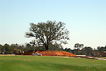 The single live oak saved when an entire hill covered with large trees was cut down for a shopping center, stands at the entrance to the shopping center.