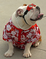 A dog shows off his flowered shirt and red goggles during the annual Fourth of July Celebration and community parade in Birkdale Village in Huntersville, NC. Birkdale Village combines the best of shopping, dining, apartments and entertainment venues within a 52-acre mixed-use development.