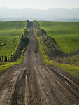 County Road 11, Late winter in the rolling Dunnigan Hills, Capay Hills in the distance, Yolo County, Calif.