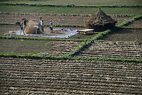 NEPAL, Terai, Tandi, the Terai is the grain basket of the country, rice farming, harvest, men winnowing paddy to sparate chaff from grain / NEPAL, Terai, Tandi, das terai ist die Kornkammer Nepals, Reisernte, die Spreu vom Reiskorn trennen