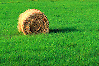 a roll of hay, or bale of hay in a green field on a farm. United States farm.
