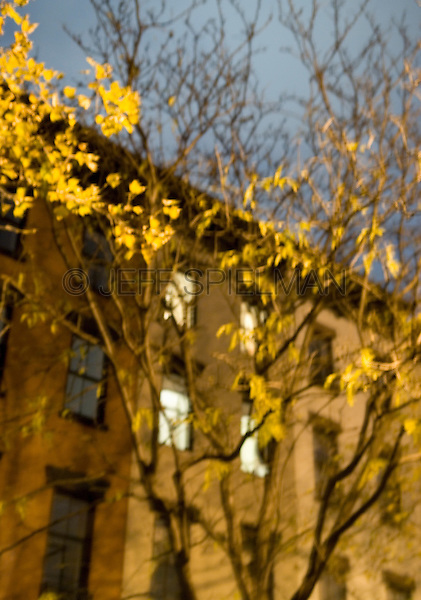 AVAILABLE FROM JEFF AS A FINE ART PRINT.<br /> <br /> Blurred Motion View of Apartment Windows Illuminated at Night, Viewed thru Tress with Autumn Foliage, The Chelsea neighborhood of Manhattan, New York City, New York State, USA