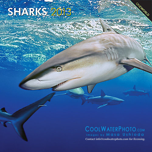 BrownTrout Sharks 2013 Calendar, cover use, USA, Image ID: Galapagos-Shark-0028