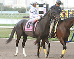 Take Charge Indy post parade. Graybar with Edgar Prado wins the 57th running of the Grade 1 Donn Handicap for 4 year olds & up, going 1 1/8 mile, at Gulfstream Park.  Trainer - Todd Pletcher.  Owner - Twin Creek Racing Stable