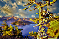Crater Lake and Wizard Island with unigue pine. Oregon