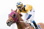 Jockey Douglas Whyte riding #10 Styling City celebrates after winning race 6 Revlon Handicap during Hong Kong Racing at Sha Tin Racecourse on November 04, 2018 in Hong Kong, Hong Kong. Photo by Yu Chun Christopher Wong / Power Sport Images