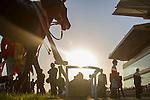 TOYOAKE,JAPAN-DECEMBER 03: Yamakatsu Ace,ridden by Kenichi Ikezoe,after wining the Kinko Sho at Chukyo Racecourse on December 03,2016 in Toyoake,Aichi,Japan (Photo by Kaz Ishida/Eclipse Sportswire/Getty Images)