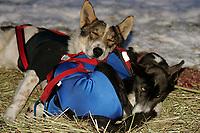 Melanie Shirlla's Dogs Cash & Lavern Rest @ Rainy Pass Checkpoint 2005 Iditarod