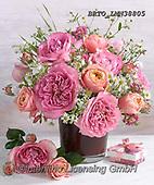 Alfredo, FLOWERS, BLUMEN, FLORES, photos+++++,BRTOLMN38805,#f#, EVERYDAY