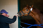 DEL MAR, CA - OCTOBER 29: Trainer Chad Summers shadow boxes with Breeders' Cup Sprint contender Mind Your Biscuits at Del Mar Thoroughbred Club on October 29, 2017 in Del Mar, California. (Photo by Alex Evers/Eclipse Sportswire/Breeders Cup)