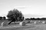 Europa, DEU, Deutschland, Nordrhein Westfalen, NRW, Rheinland, Niederrhein, Wesel - Ginderich, Typische Landschaft, Sommer, Baeume, Kopfweiden, Gruenland, Heuballen, Kategorien und Themen, Natur, Umwelt, Landschaft, Jahreszeiten, Naturschutz, Naturschutzgebiete, Landschaftsschutz, Biotop, Biotope, Landschaftsschutzgebiete, Landschaftsschutzgebiet, Oekologie, Oekologisch, Typisch, Landschaftstypisch, Landschaftspflege<br /> <br /> [Fuer die Nutzung gelten die jeweils gueltigen Allgemeinen Liefer-und Geschaeftsbedingungen. Nutzung nur gegen Verwendungsmeldung und Nachweis. Download der AGB unter http://www.image-box.com oder werden auf Anfrage zugesendet. Freigabe ist vorher erforderlich. Jede Nutzung des Fotos ist honorarpflichtig gemaess derzeit gueltiger MFM Liste - Kontakt, Uwe Schmid-Fotografie, Duisburg, Tel. (+49).2065.677997, archiv@image-box.com, www.image-box.com]