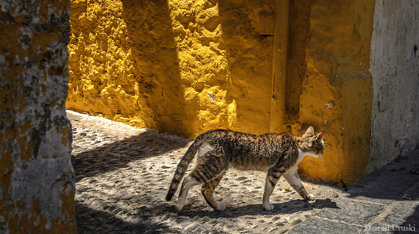 Fine Art Print Photograph of a calico cat strolling through the ancient streets of Rhodes, Greece the golden rays of sunlight highlighting the textures of the building and the multi colours of the cat's fur.