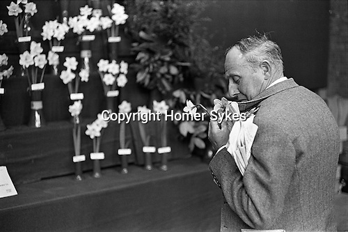Victoria, London. 1969<br /> The Royal Horticultural Society flower show, a member of the public makes himself a buttonhole with some competition Narcissi.