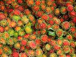 Close up of lychees
