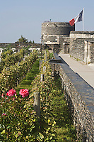 Europe/France/Pays de la Loire/49/Maine-et-Loire/ Angers: le Château  sa vigne et la Tour du Moulin