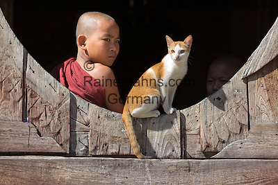 Myanmar, (Burma), Shan State, Nyaung Shwe: Student monk and cat at the Shwe Yan Pyay monastery   Myanmar (Birma), Shan Staat, Nyaung Shwe: junger Moench und Katze im Shwe Yan Pyay Kloster