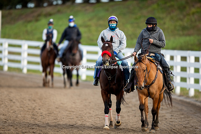 November 1, 2020: Venetian Harbor, trained by trainer Richard Baltas, exercises in preparation for the Breeders' Cup Filly & Mare Sprint at Keeneland Racetrack in Lexington, Kentucky on November 1, 2020. Alex Evers/Eclipse Sportswire/Breeders Cup /CSM