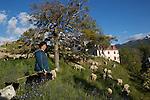 Claudette Bourrier, bergère en train de faire paturer ses moutons sur les remparts de la place forte de Mont-Dauphin construite par Vauban à partir de 1693, inscrite en 2008 au Patrimoine mondial de l'UNESCO.<br /> Mont-Dauphin castle built by Vauban in 1693, on the Unesco list since 2008
