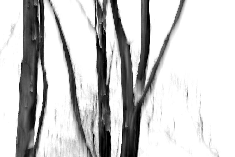Europa, DEU, Deutschland, Nordrhein Westfalen, NRW, Ruhrgebiet, Muelheim, Wald, Waldgebiet Uhlenhorst, Buchen, Buchenwald, Schnee, Winter, Kategorien und Themen, Natur, Umwelt, Landschaft, Jahreszeiten, Stimmungen, Landschaftsfotografie, Landschaften, Landschaftsphoto, Landschaftsphotographie, <br /> <br /> [Fuer die Nutzung gelten die jeweils gueltigen Allgemeinen Liefer-und Geschaeftsbedingungen. Nutzung nur gegen Verwendungsmeldung und Nachweis. Download der AGB unter http://www.image-box.com oder werden auf Anfrage zugesendet. Freigabe ist vorher erforderlich. Jede Nutzung des Fotos ist honorarpflichtig gemaess derzeit gueltiger MFM Liste - Kontakt, Uwe Schmid-Fotografie, Duisburg, Tel. (+49).2065.677997, <br /> archiv@image-box.com, www.image-box.com]