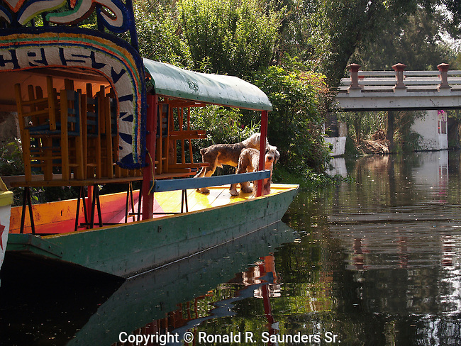 Dogs on tourist barge
