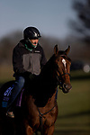 November 4, 2020: Golden Pal, trained by trainer Wesley A. Ward, exercises in preparation for the Breeders' Cup Juvenile Turf Sprint at Keeneland Racetrack in Lexington, Kentucky on November 4, 2020. Alex Evers/Eclipse Sportswire/Breeders Cup