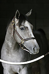 30 July 2009: Alfarabi (2yo c by Yes Its True) at Del Mar Race Track, Del Mar, CA