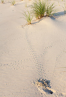 Avon, Outer Banks, North Carolina.  Crab Tracks in the Sand.