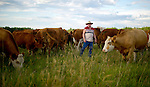 Rancher Carmen Langer looks over some of his pure bred cattle at one of their fields near Peace River, Alberta on July 14, 2010. Residents in the area have been complaining of strong odours in the air which they say are affecting the health of their animals and family members..Jimmy Jeong / www.jimmyshoots.com