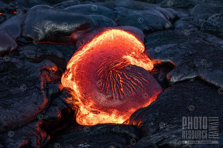 Molten lava creates shapes like this one resembling a sea shell, seen on the coastal plains of Pulama Pali, Hawai'i Volcanoes National Park, Puna, Hawai'i Island, January 2018.