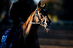 November 4, 2020: Sealiway, trained by trainer Frederic Rossi, exercises in preparation for the Breeders' Cup Juvenile Turf at Keeneland Racetrack in Lexington, Kentucky on November 4, 2020. Jon Durr/Eclipse Sportswire/Breeders Cup