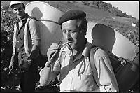 Les Corbières. 4 Octobre 1975. Vue de deux hommes en train de vendanger.
