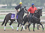 Oscar Party, trained by Wayne Catalano,exercises in preparation for the upcoming Breeders Cup at Santa Anita Park on November 1, 2012.