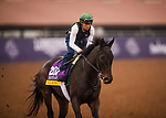 DEL MAR, CA - OCTOBER 29: Breeders' Cup Distaff contender Elate breaks off for her workout at Del Mar Thoroughbred Club on October 29, 2017 in Del Mar, California. (Photo by Alex Evers/Eclipse Sportswire/Breeders Cup)