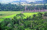 BRAZIL Amazon, slash and burn, burning and logging of rainforest for cultivation of soya or cattle breeding for meat production / BRASILIEN   Amazonas, Brandrodung, Abholzung von Regenwald fuer Rinderhaltung oder Anbau von Soja fuer die Fleischproduktion