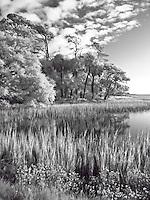 Botany Bay marsh in black and white