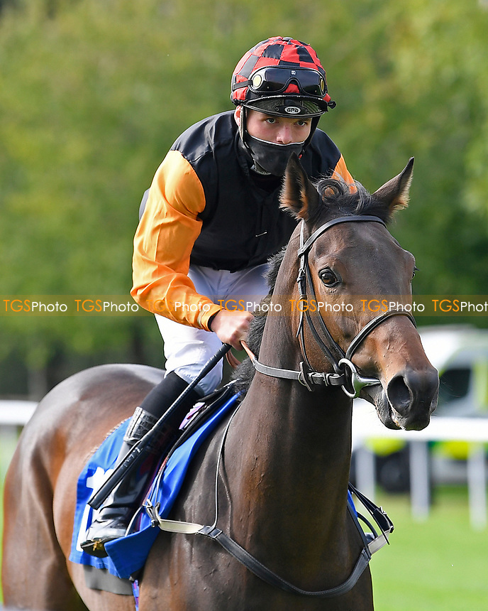 Hestercombe ridden by Theodore Ladd goes down to the start of The Radcliffe & Co Novice Median Auction Stakes (Div 2) during Horse Racing at Salisbury Racecourse on 11th September 2020