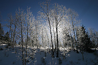 The sun peeks from behind winter-bare aspen on the western side of Monarch Pass in Colorado's Rocky Mountains.