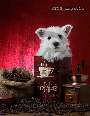 Xavier, ANIMALS, dogs, photos, SPCHDOGS815,#a# Hunde, perros