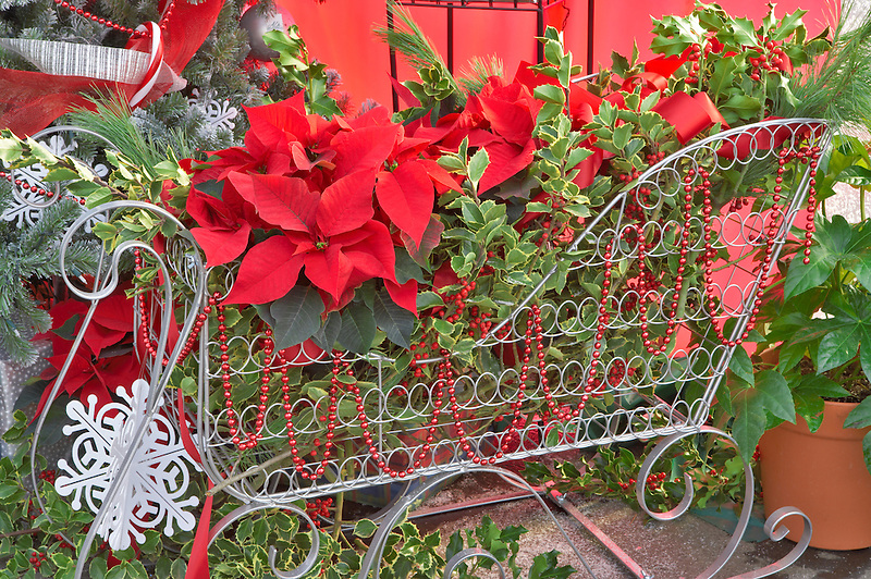 Basket of Christmas decorations. Al's Nursery. Woodburn. Oregon