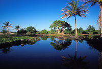 A coastal pond near Waiakauhi, an oasis in the dry area, South Kohala coast