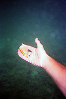 Small yellow conch shell in hand<br />